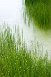 Swamp morass Royalty Free Stock Photos