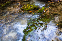Swamp Moss Stock Photography