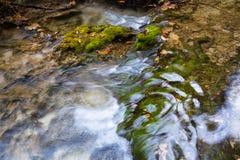 Swamp moss Royalty Free Stock Photo