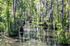 Swamp near Charleston, South Carolina royalty free stock images