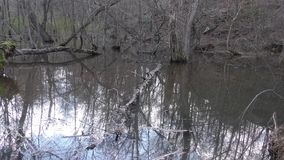 Georgia, Chattahoochee River, Swamp, rotting trees, murky water, eerie sounds