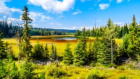 Swamp near Lac Le Jeune Road by Kamloops, British Columbia, Canada. Swampy area along the Lac Le Jeune Road in the Okanagen, near Kamloops, British Columbia royalty free stock photo