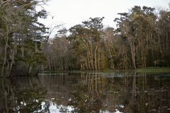 Swamp near New Orleans, Louisiana Stock Photo