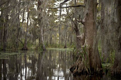 Swamp near New Orleans, Louisiana Stock Photos