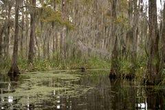 Swamp near New Orleans, Louisiana Royalty Free Stock Photography