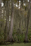 Swamp near New Orleans, Louisiana Royalty Free Stock Image