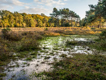 Swamp in New forest Stock Images