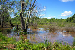 Swamp of New Jersey Stock Photography