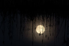 Swamp at Night. Moon Reflection in swamp at night Royalty Free Stock Image