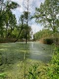 Swamp painted in green royalty free stock images