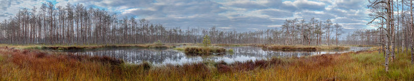 Swamp panorama. Royalty Free Stock Images