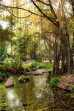 Swamp in a Park Royalty Free Stock Photos