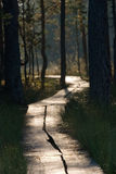 Swamp path 1 Stock Photos