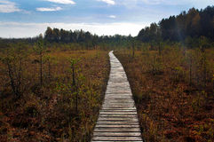 Swamp path Stock Photos