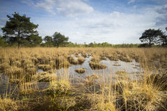 Swamp with peat moss. Wetlands with decayed vegetation known as peat moss or sphagnum at a sunny day in Spring stock photography