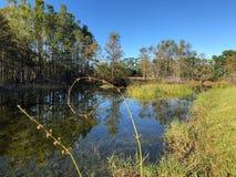 swamp plant swirl royalty free stock photo