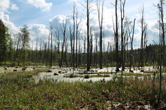Swamp in Poland. Near Ryn city; spring view Stock Photo