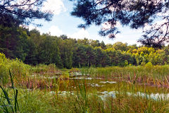 Swamp in Poland Royalty Free Stock Images