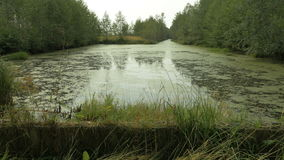 Swamp pool in the national park reserve. Autumn daytime. Smooth dolly shot stock video