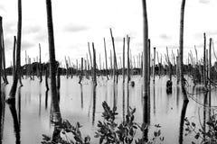 Swamp Stock Photos