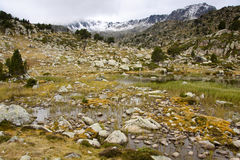Swamp in Pyrenees Stock Photography