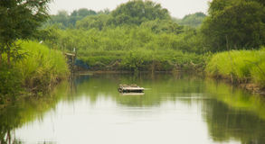 Swamp. A raft in the swamp Royalty Free Stock Photography