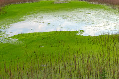 The swamp with reflection of the blue sky. royalty free stock photos