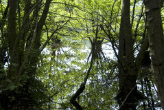 Swamp reflections Royalty Free Stock Photos