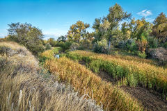 Swamp and riparian forest in eastern Colorado Stock Images