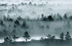Swamp scene. Cold and misty morning in estonian swamp Stock Photography