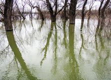 Swamp in Serbia. Trees and water Royalty Free Stock Photography