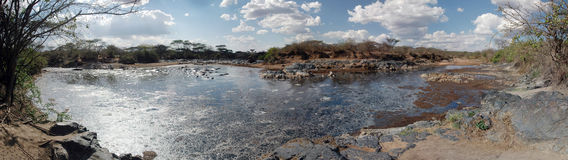 Swamp in the Serengeti - Panoramic view stock photo