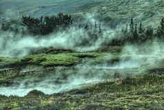 Swamp shrouded in mist Royalty Free Stock Images