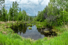 Swamp in the Siberian forest Royalty Free Stock Photo