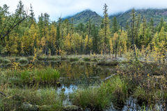 Swamp in the Siberian taiga Royalty Free Stock Image