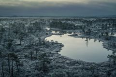 Swamp with small pine trees covered in early winter morning frost Stock Photography