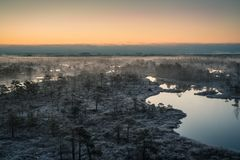 Swamp with small pine trees covered in early winter morning frost Stock Photo