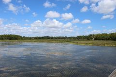 Swamp in south Florida stock image