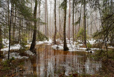 Swamp in spring Stock Photography