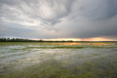 Swamp with stormy clouds Royalty Free Stock Photo