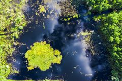 Swamp summer landscape, green, top view. Reflection of clouds in water. Top view of swamp field stock images
