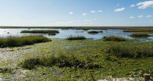Swamp Royalty Free Stock Image