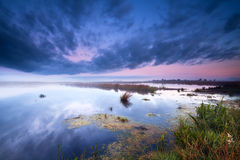 Swamp at sunrise Stock Images