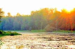 Swamp Sunrise Stock Photos