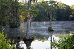 Swamp at Sunrise. Morning sun hits mist in South Carolina swamp Royalty Free Stock Photography
