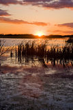 Swamp at sunset. Sun setting beyond a swamp or pond Royalty Free Stock Image