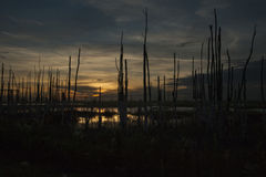 Swamp Sunset. Is the Everglades in Florida at Sunset, full of crocodiles and snakes, very scary to stand to take pictures. Commercial use royalty free stock image
