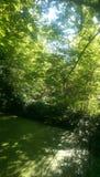 Swamp. #swamp #sunshine #trees #london #Surrey royalty free stock photos
