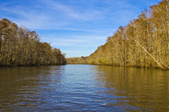 Louisiana Swamp. Swamps in New Orleans, Louisiana royalty free stock images