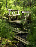 Swamp Trail. A wood board trail through the swamp stock photos